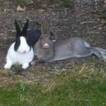 Mit einer Webseite über Kaninchen Geld verdienen ist vermutlich nicht einfach