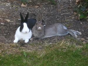 Haben Kaninchen auch eine freien Willen?