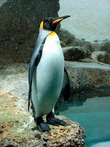 Nach dem Google Pinguin Update bleibt fast alles gleich