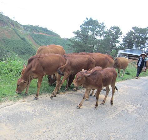 Ob man seinen Inhalt mit Rindern aus Vietnam interessant gestalten kann?
